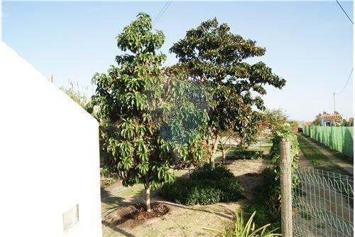 Quinta - T2 - Venda - Vila Nova de Milfontes, Odemira ... - photo#38