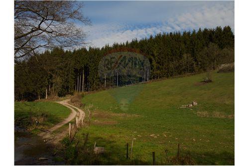 RE/MAX Premium, terrain forestier à vendre à Niederfeulen