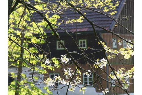 Ast und Fenster