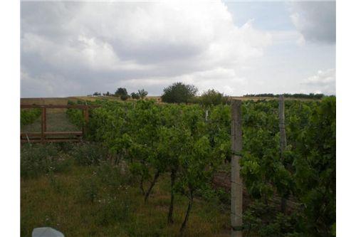 Weingarten (1)