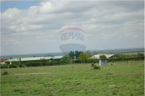 Land - For Sale - Kyumbi - 17 - 106003014-141