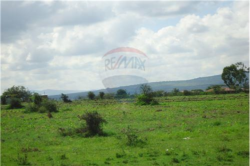 Land - For Sale - Kyumbi - 16 - 106003014-141