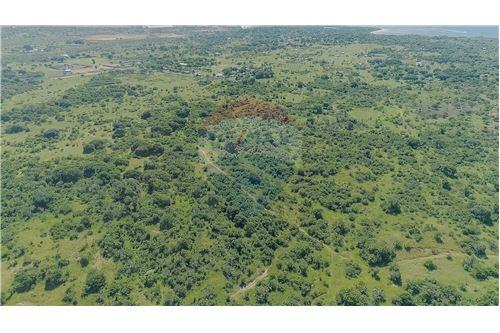 Land - For Sale - Dar es Salaam - 13 - 115015007-11