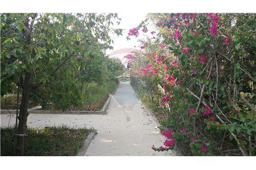 Hotel - For Rent/Lease - Zanzibar - 27 - 115006024-34