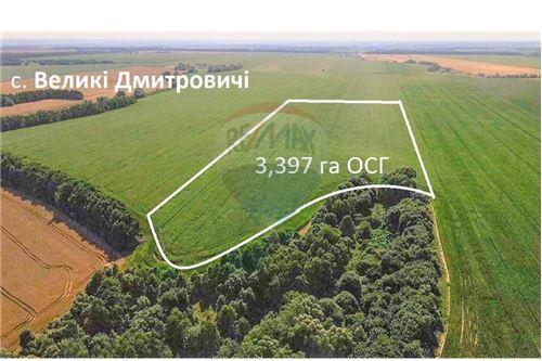 Земельна ділянка - Продаж - Великі Дмитровичі - 1 - 116020006-5