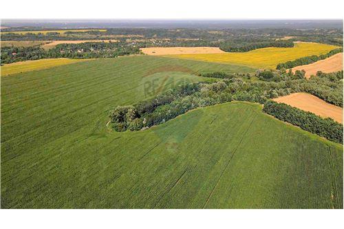 Земельна ділянка - Продаж - Великі Дмитровичі - 3 - 116020006-5