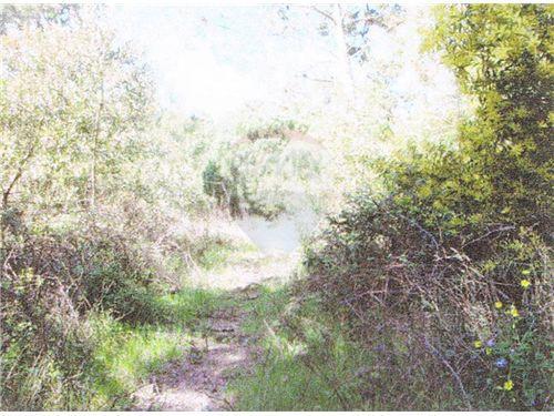 vegetação existente