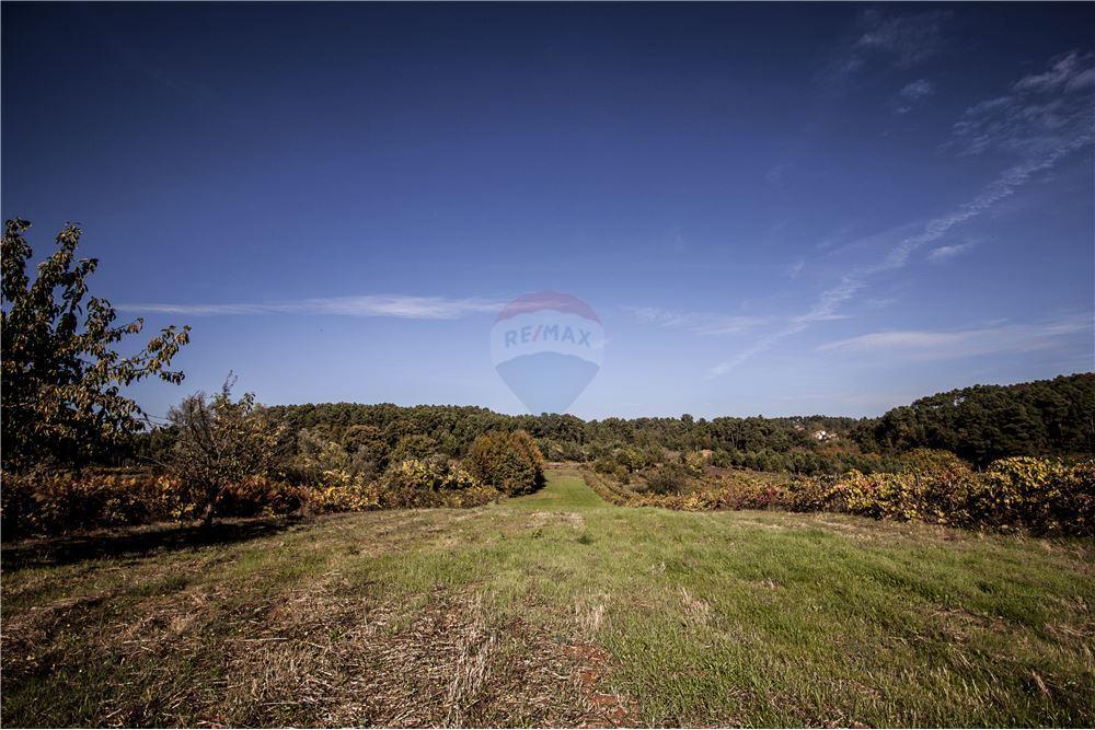 bdb48ab4cfb Land - For Sale - Constantim e Vale de Nogueiras