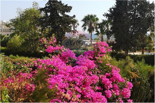 Apartment - For Rent - Parekklisia Sea Front Parekklisia, Limassol - 18 - 480031093-39