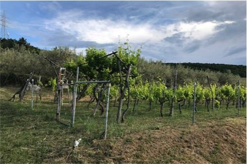 भूमि - बिक्री के लिए - Dekani, Primorska Južna - 6 - 490111018-45