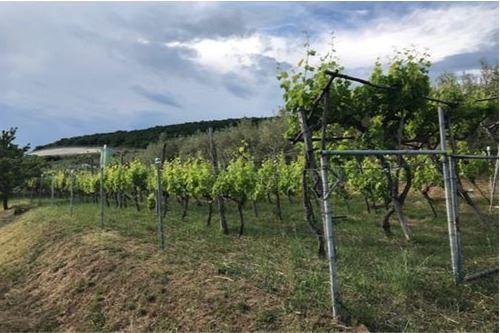 भूमि - बिक्री के लिए - Dekani, Primorska Južna - 7 - 490111018-45