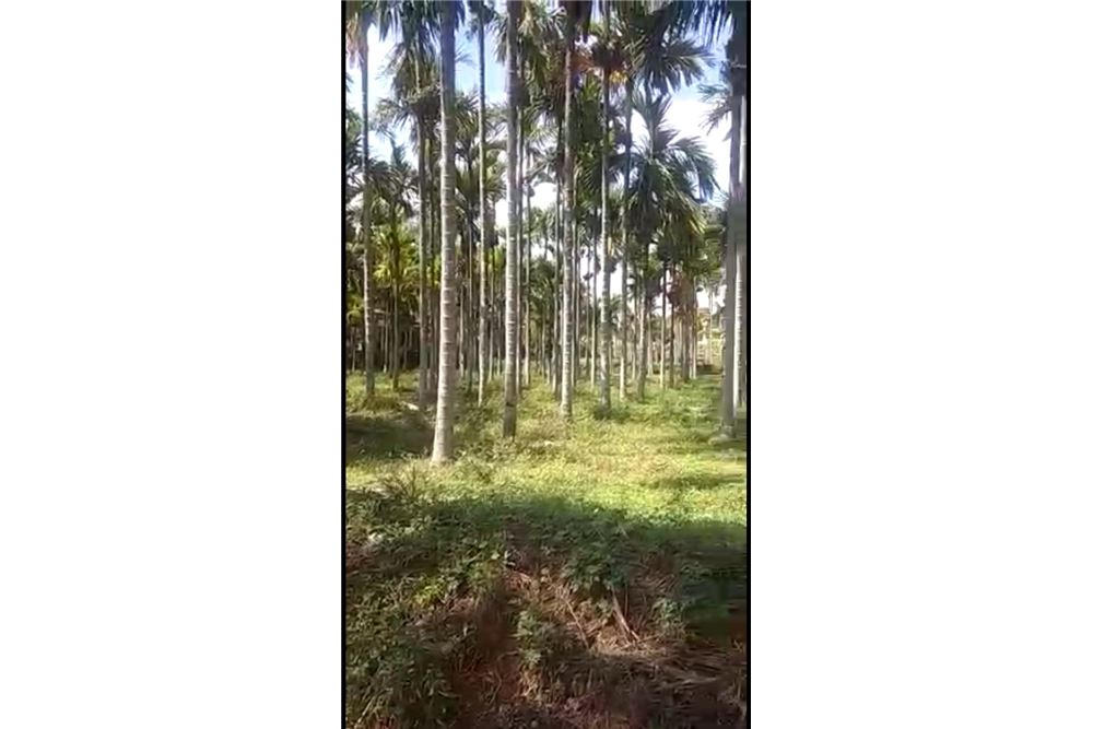 Agriculture Land - For Sale - Tumkur, India - 511012001-209