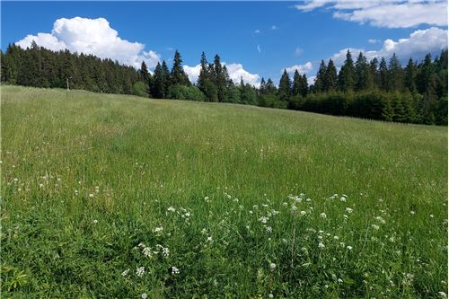 Land - For Sale - Bialy Dunajec, Poland - 1 - 470151035-23
