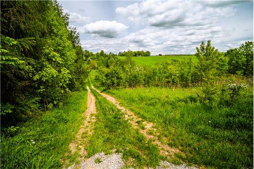 भूमि - बिक्री के लिए - Nowa Wieś, Polska - 29 - 800241006-9