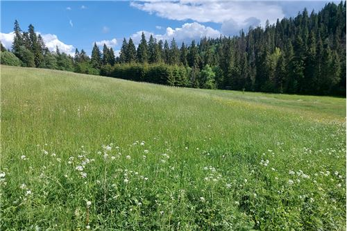 Land - For Sale - Bialy Dunajec, Poland - 4 - 470151035-23