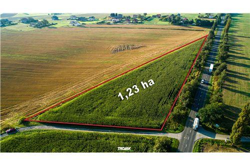 Investment - For Sale - Rudnik, Poland - 4 - 800061057-24
