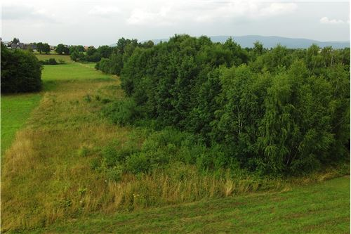 Plot of Land for Hospitality Development - For Sale - Lipowa, Poland - 10 - 800061087-4