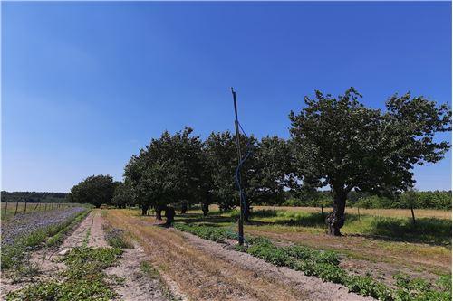 Gospodarstwo rolne - Sprzedaż - Cychrowska Wola, Polska - 21 - 810051016-63