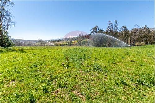 Hacienda - De Venta - Santa Rosa de Cuzubamba, Ecuador - 25 - 890091136-74