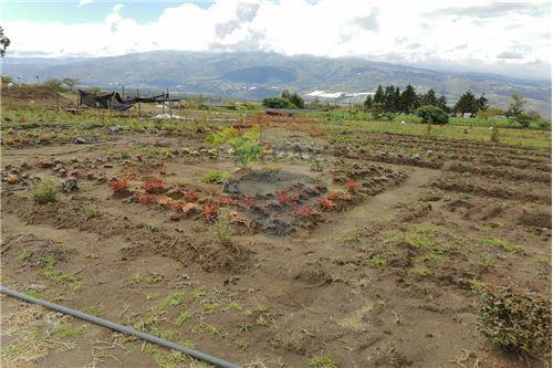Terreno - De Venta - Tocachi, Ecuador - 39 - 890091433-9