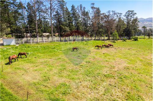 Hacienda - De Venta - Santa Rosa de Cuzubamba, Ecuador - 19 - 890091136-74