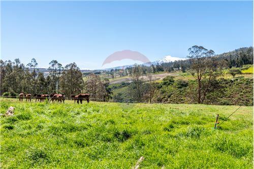 Hacienda - De Venta - Santa Rosa de Cuzubamba, Ecuador - 23 - 890091136-74