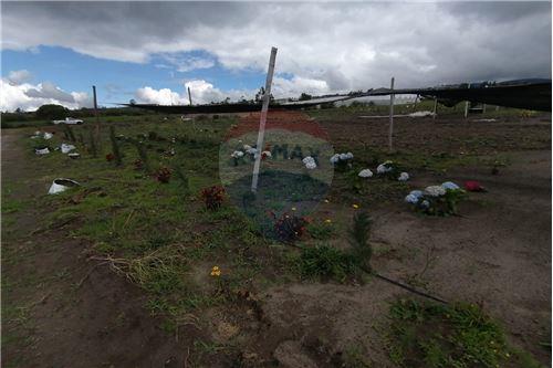 Terreno - De Venta - Tocachi, Ecuador - 37 - 890091433-9