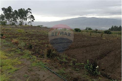 Terreno - De Venta - Tocachi, Ecuador - 35 - 890091433-9