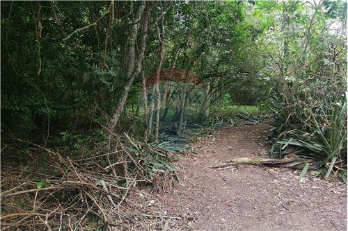 Quinta - De Venta - Montecristi, Ecuador - 23 - 890351026-178