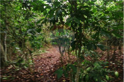 Quinta - De Venta - Montecristi, Ecuador - 29 - 890351026-178