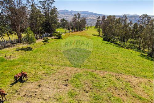 Hacienda - De Venta - Santa Rosa de Cuzubamba, Ecuador - 6 - 890091136-74